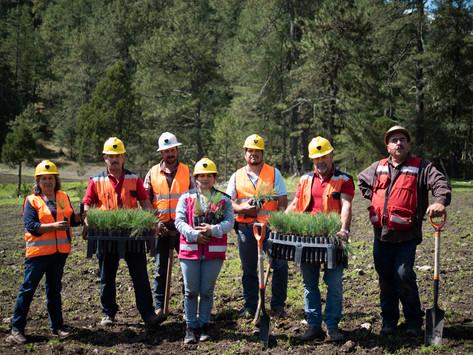 Identifican y reconocen las mejores prácticas empresariales a favor de los bosques