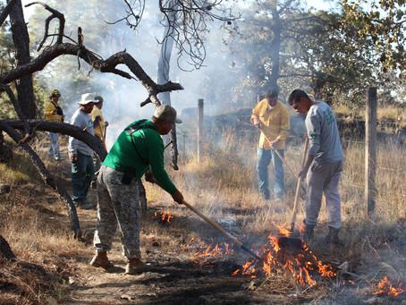 Brigadas forestales: imprescindibles en la prevención y combate de incendios