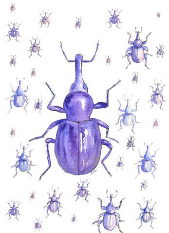 Weevil-blue color.jpg