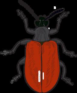 AP beetle drawing-China.png