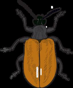 AP beetle drawing-Nepal.png