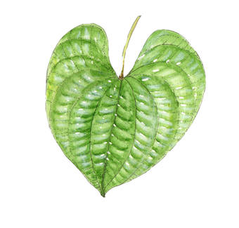 AP leaf.jpg