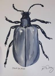 Air potato beetle in gray