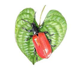 AP and beetle.jpg