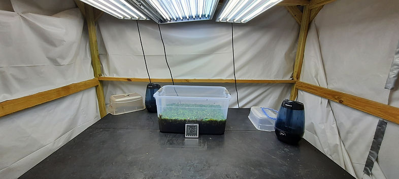 Indoor greenhouse.jpg