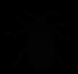 Lilioceris.tif