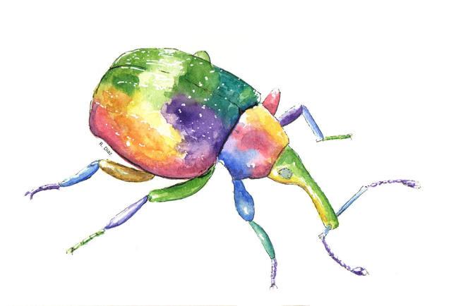 Weevil in color.jpg