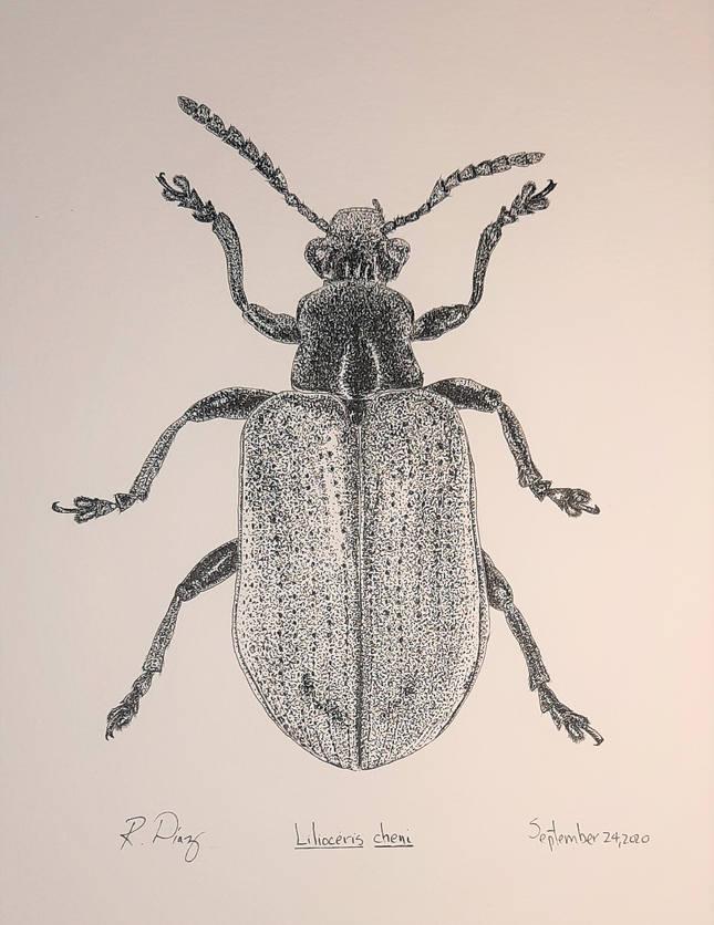 Lilioceris cheni.jpg