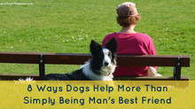 8 Ways Dogs Help More Than Simply Being Man's Best Friend