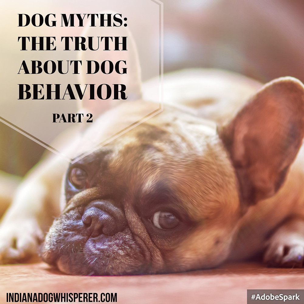 Dog Myths: the truth about dog behavior