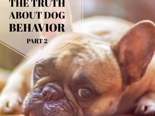 Dog Myths Part 2: the truth about dog behavior