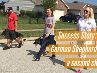 Success Story: Deaf German Shepherd gets a second chance