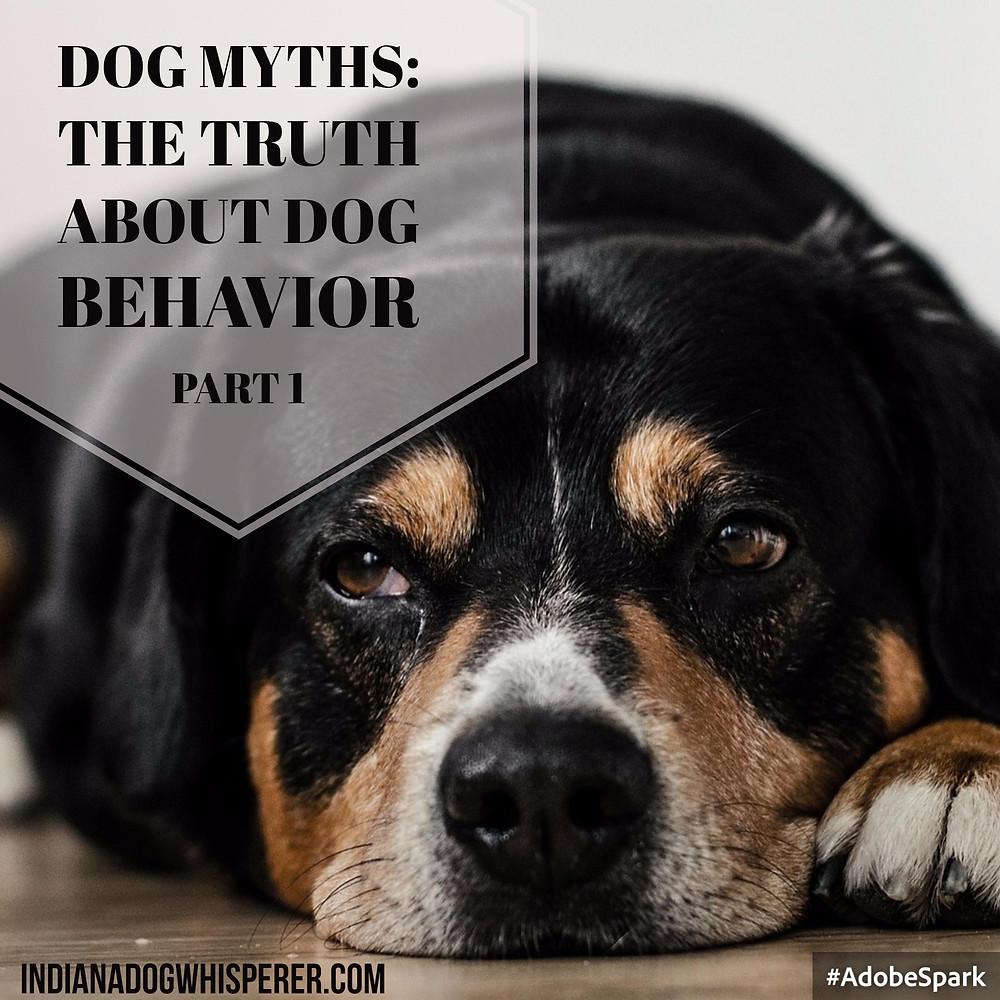 Dog Myths: the truth about dog behavior