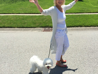 Success Story: Three Bichon Frise's learn their manners