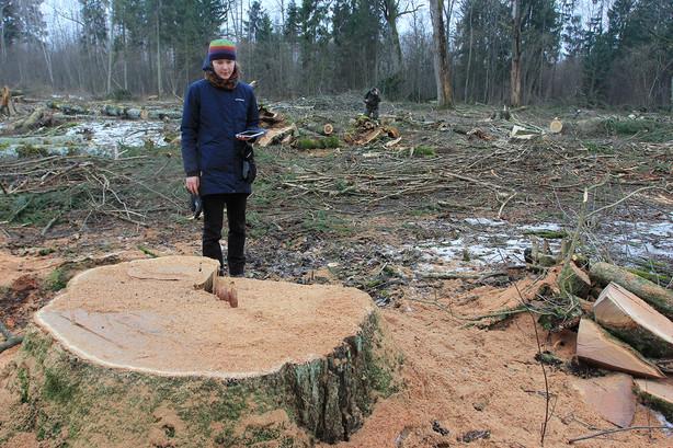 """Kaišiadorių rajone, ,,NATURA 2000"""" teritorijoje iškirsti seni ąžuolai su žiemojančiu retu vabalu"""