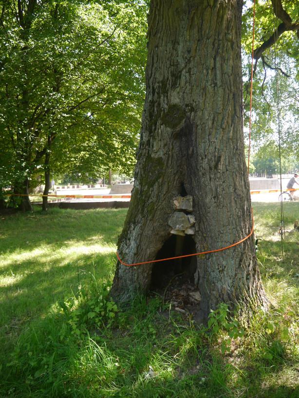 Kokia priežiūra reikalinga medžiams senoliams?