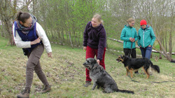 Osmo-dog training methods and practice in Lithuania