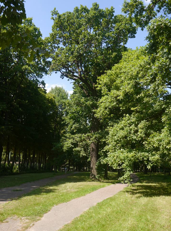 Nature's secrets in Kaunas Oak Forest