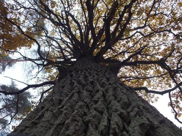 Gamtotvarkos planas – nauda ir gamtai, ir žmonėms