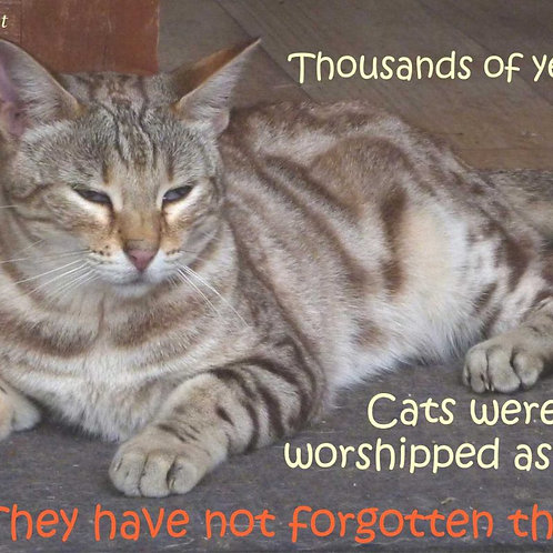 1000s Years Ago Cats Worshipped As Gods Magnet