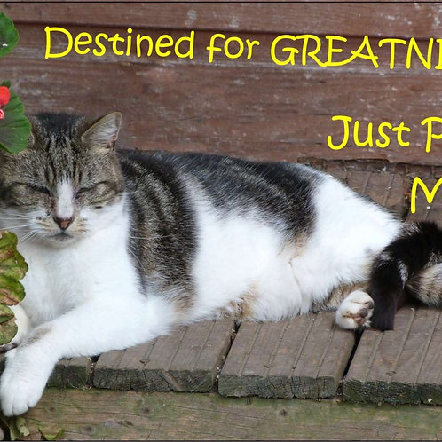 Destined for GREATNESS… Just Pacing Myself Magnet