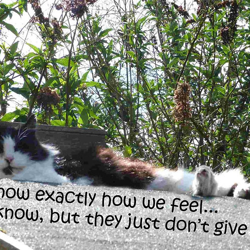 Cats Know Exactly How We Feel Magnet