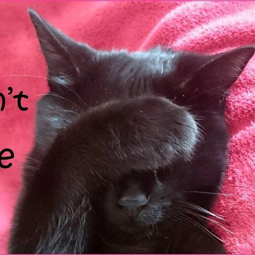 I Don't Like Mondays Cat Magnet