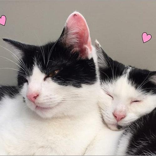 Cat Valentines Magnet
