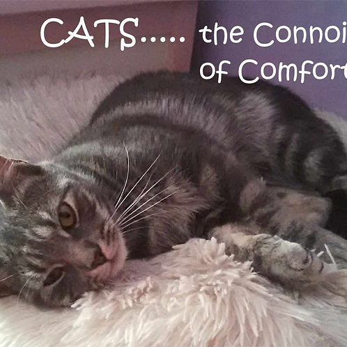 Cats The Connoisseurs Of Comfort Magnet