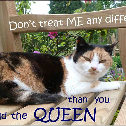 Don't treat me any differently than you would the Queen Magnet