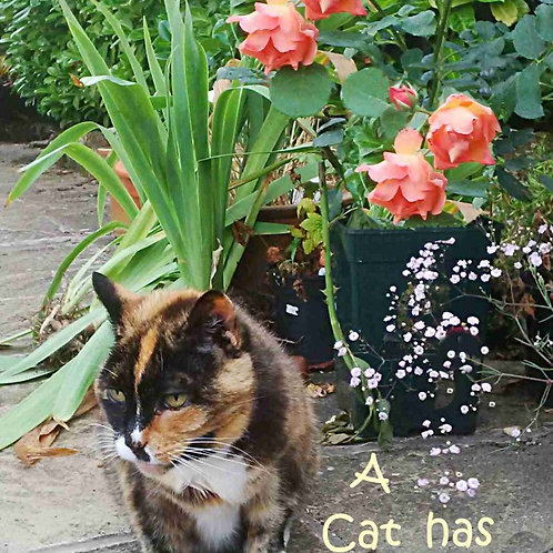 Roses and Cats Both Worth Risk Magnet