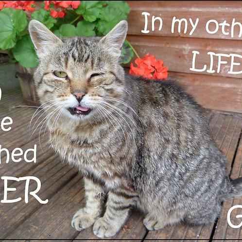 In my other life I'm a Saber toothed tiger Grrr! Magnet
