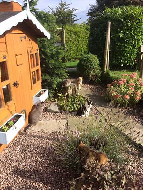 Shropshire Cat Rescue Retirement Village