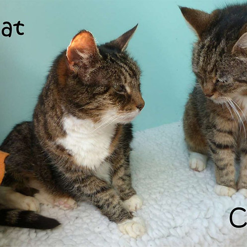 Cat Chat Magnet