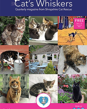 Summer21_Cats_Whiskers-1.jpg