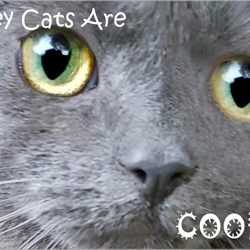 copy of Grey Cats Rock Magnet