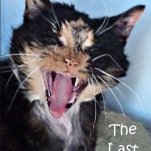 Cats always have last Laugh Magnet