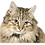 Thumbnail: Custom photo cat etched night light