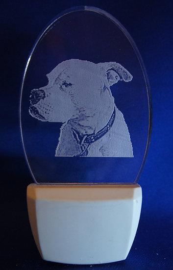 American Bulldog head Night Light