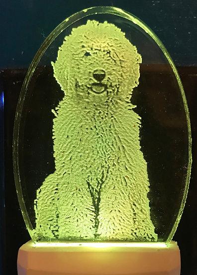 goldendoodle bodyNight Light