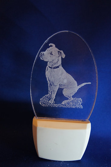 Pit bull sitting Night Light