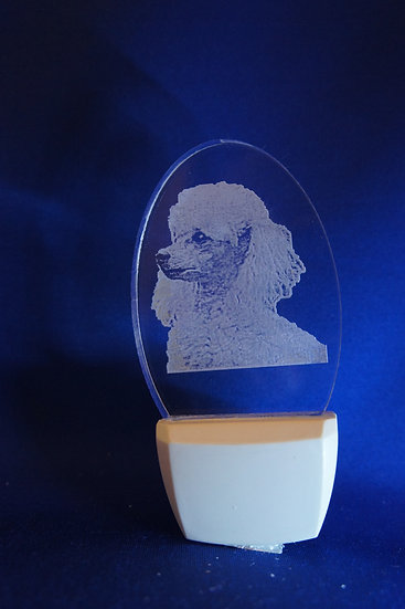 Toy Poodle Night Light