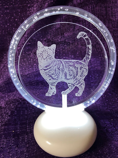 Tabby Cat halo illuminated