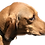 Thumbnail: Custom dog/pet photos 5x7