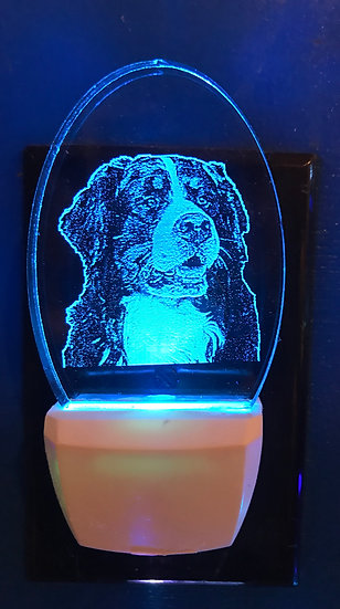 Bernese Mountain Dog Night Light