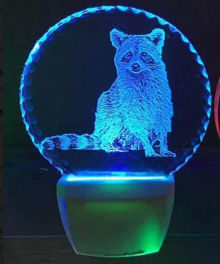 Raccoon body night light