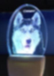 husky wh.jpg