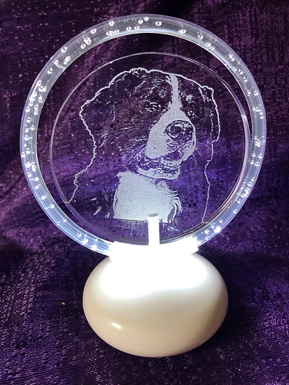 Bernese Mountain Dog halo illuminated