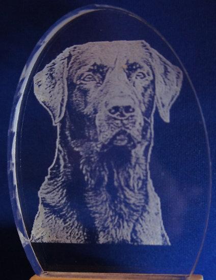 black Labrador Retreiver Night Light
