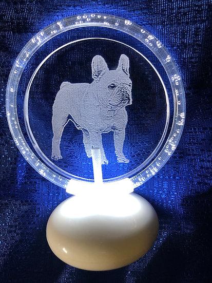 French Bulldog etched halo illuminated
